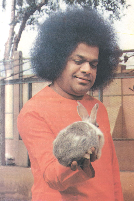 Сатья Саи Баба с кроликом в руке - Sathya Sai Baba with rabbit in hand